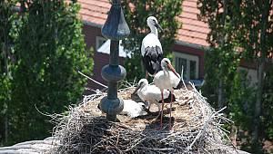 Caminin baş tacı misafirleri