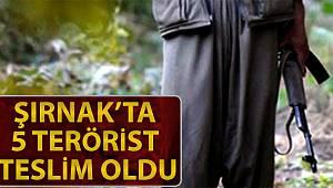 4 terörist ikna yoluyla, 1 terörist de kaçarak Şırnak'ta teslim oldu
